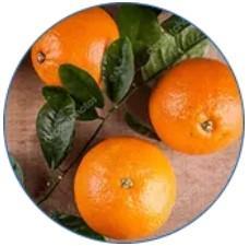 Extracto del fruto de la naranja amarga