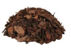 Extracto de corteza de pino