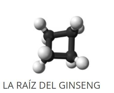 LA RAÍZ DEL GINSENG