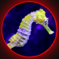 SEAHORSE EXTRACT