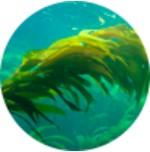 Calcio mineral de alga Lithothamnium