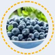 Frutas de arándano