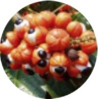 Extracto de semillas de guaraná